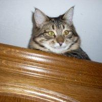 Степа на шкафу :: parasik62 Воронина