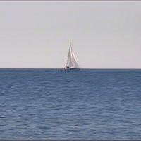 на море :: linnud