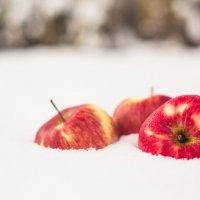 Яблоки на снегу :: Елена Сергиенко