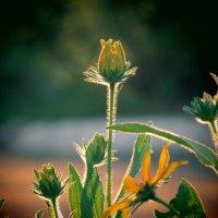 Цветок :: Cerg Smith