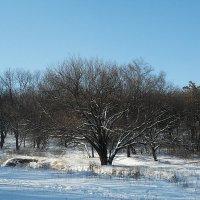 Зимний погожий денек! :: Наталья