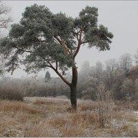 Морозный туманный день. :: Роланд Дубровский