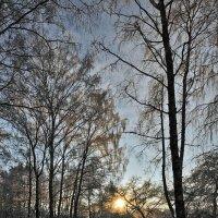 Морозный закат. :: Горбушина Нина