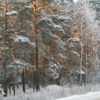 зимний лес :: Александр Швец