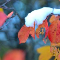 Первый снег :: Angelika Faustova