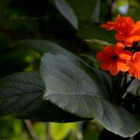 3D цветок) :: Юлия
