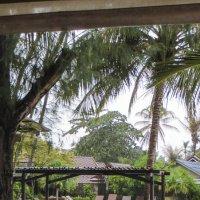 Тропический дождь :: Жанна Дек