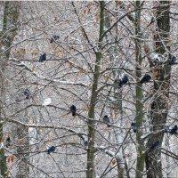 Птицы в зимнем парке... :: Тамара (st.tamara)