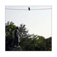 Тарас и голубка :: sv.kaschuk
