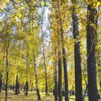 Осенний парк :: юрий Амосов