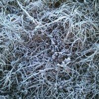 Морозная трава :: BoxerMak Mak