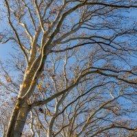 Деревья в парке :: Эхтирам Мамедов