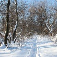 Зима :: Олег