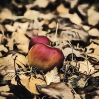 Яблоки на...листьях.Осенние зарисовки... :: Александр Вивчарик