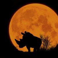 Носорог (из серии ночные силуэты)... :: олег
