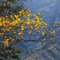 осень :: viton