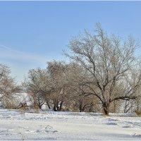 Очень живописные деревья :: Дмитрий Конев