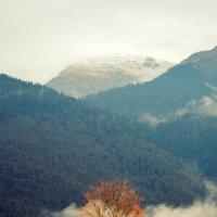 Ноябрь в Красной поляне :: Татьяна Лютаева