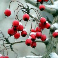 Зимние витаминки :: Ольга Голубева