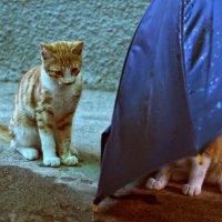 Кто не спрятался, я не виноват! :: Ирина Данилова