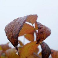 осень :: Марина Арбузова