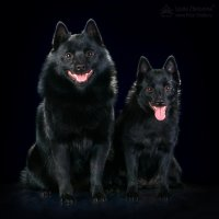 Собаки - улыбаки! :: Людмила Желонина