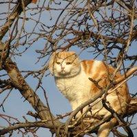 на дереве :: tgtyjdrf