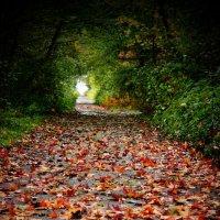 Осенний ноктюрн :: Dog Fanny