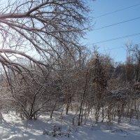 Снег и солнце... :: Тамара (st.tamara)