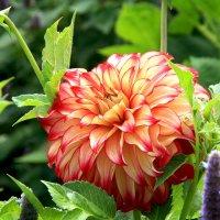 Цветы августа :: Alexander