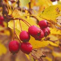 осень :: герасим свистоплясов