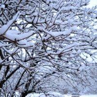 Зима :: Angelika Faustova