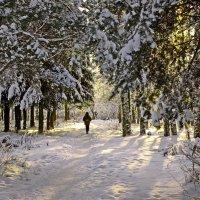 Дорожка в лесу :: Валерий Талашов