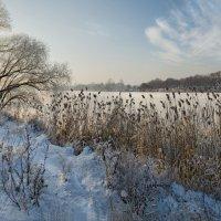Пришла и к нам красавица - зима :: Лидия Цапко