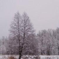одинокое дерево :: Елена Степанова