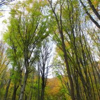 буковый лес :: Dusty Miller