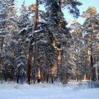 после снегопада... :: Галина Филоросс
