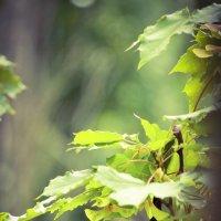 Побледневшие листья окна :: Vitalik Babich