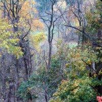 Осеннее разноцветие :: anna borisova