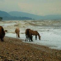 Дикие лошади на водопое :: Римма Волченко