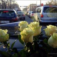 Фисташковые розы. :: Anna Gornostayeva
