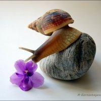 Любовь к прекрасному! :: Anna Gornostayeva
