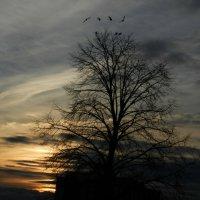 Вид из нашего окна рано утром... :: Юрий Поляков