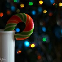 в ожидании праздников... :: Tatyana Belova