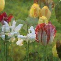 весна :: Stanislava Kudinova