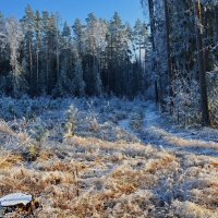Зима  и  лес. :: Валера39 Василевский.