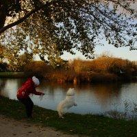 Охота на чаек в парке. :: Елена Мартынова
