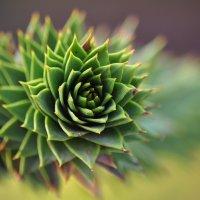 зеленые колючки :: Августа