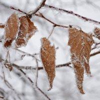 подмерзает.. :: Татьяна Кретова