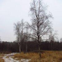 IMG_6870 - Сейчас так :: Андрей Лукьянов